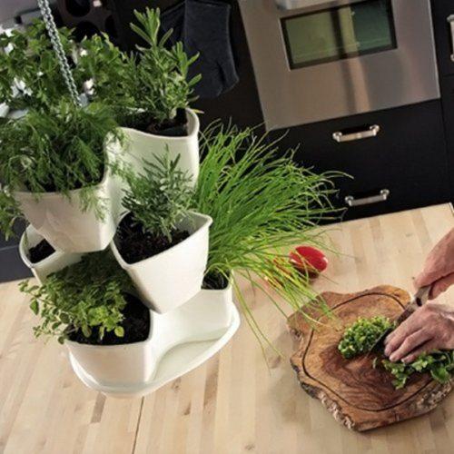 h ngender kr utergarten geschenk f r. Black Bedroom Furniture Sets. Home Design Ideas